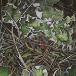 forestfloor_berries