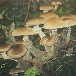 forestfloor_mushrooms