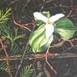 forestfloor_trillium