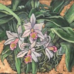 orchid_6