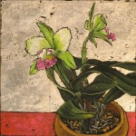 orchid_8